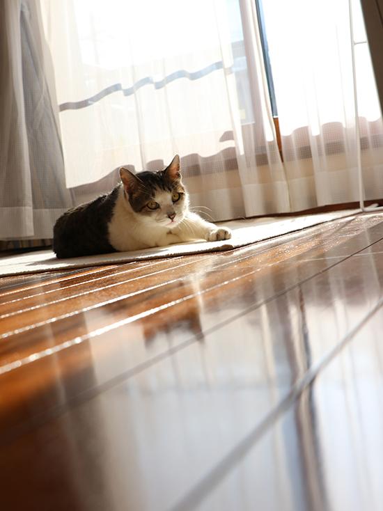 窓辺で寝転ぶ猫