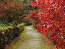 童子沢親水公園の橋と紅葉