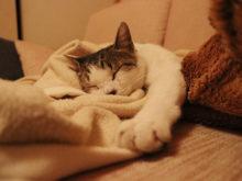 爆睡する猫