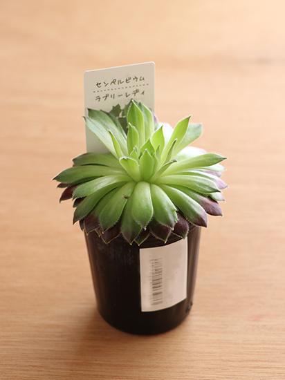 カメラで植物を撮影