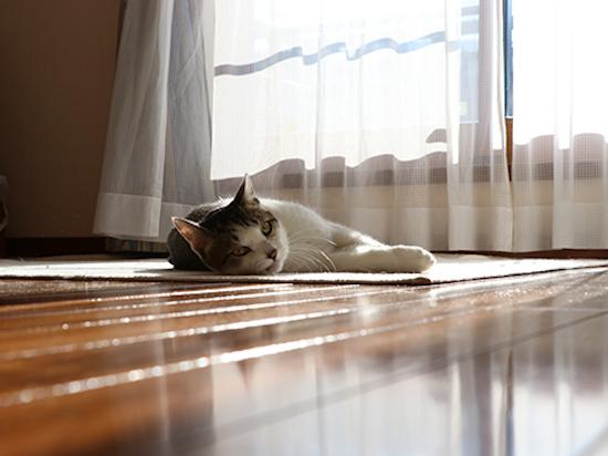 寝転がって日向ぼっこする猫