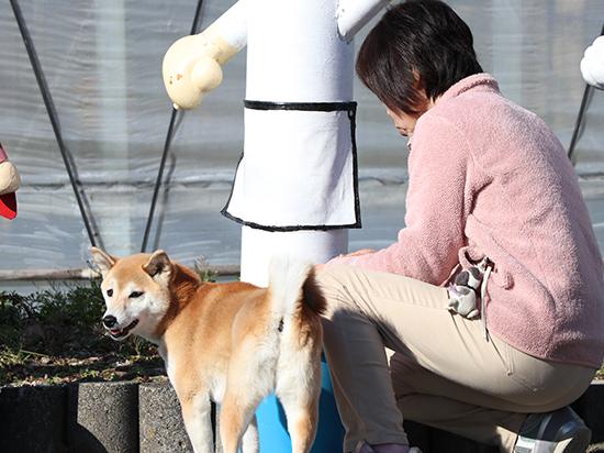 柴犬とおねえさん