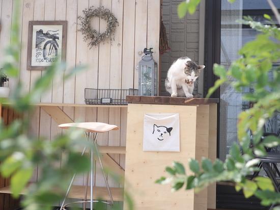カウンターの上のネコ