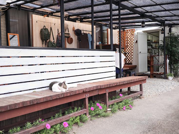 島田市のおしゃれなカフェ「キッチンユノートル」猫店長